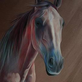 Gull G - Arabian Horse Portrait 03