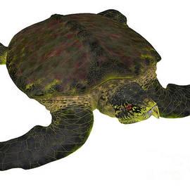 Archelon Turtle on White