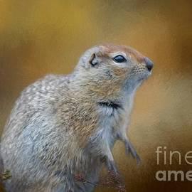 Eva Lechner - Arctic Ground Squirrel
