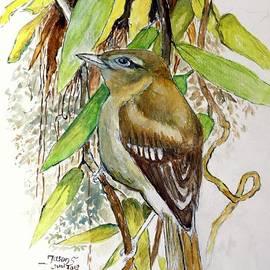 Arctic Warbler by Jason Sentuf