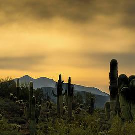 Phil Rispin - Arizona and the Sonoran Desert
