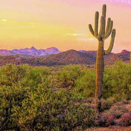 Susan Crossman  Buscho - Arizona Desert