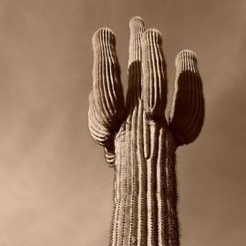 Bill Tomsa - Arizona Icon