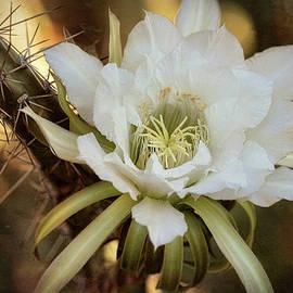 Saija Lehtonen - Arizona Summer Blooms