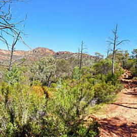 Bill Robinson - Arkaroo Rock hiking trail.Wilpena Pound