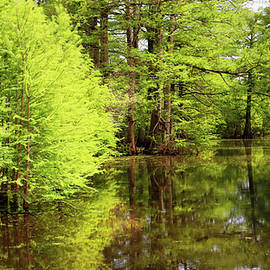 Arkansas Bottomlands by Nicholas Blackwell