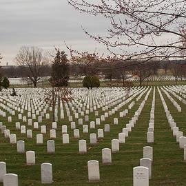 Arlington National Cemetery   by Ruth Jolly