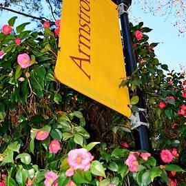Linda Covino - Armstrong State University banner