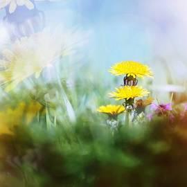Jaroslav Buna - Around The Meadow