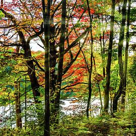 Steve Harrington - Arrowhead Provincial Park - The Magic Hour 4