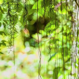 Felix Lai - Art Of Nature