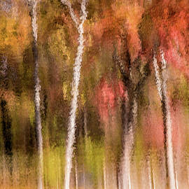 Don Johnson - Artistic Forest Reflections