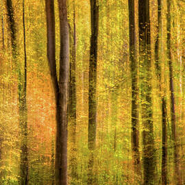 Don Johnson - Artistic Forest Swipe