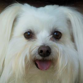 Linda Tiepelman - Artistic Puppy