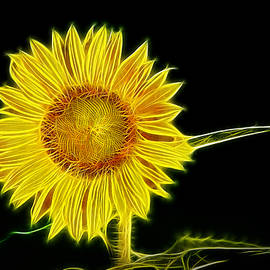 Don Johnson - Artistic Sunflower in the Sun