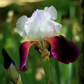 Reid Callaway - As Pretty As You Get Flower Garden Art