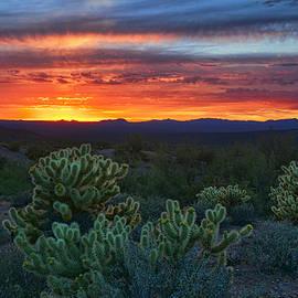 As the Sun Sets on the Cholla  by Saija  Lehtonen