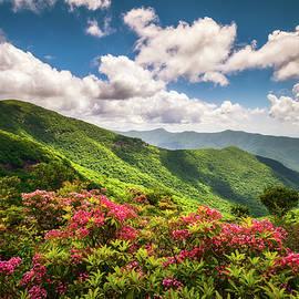 Dave Allen - Asheville NC Blue Ridge Parkway Spring Flowers Scenic Landscape