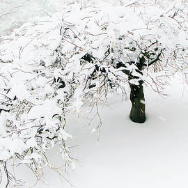 Asian Winter - Jessica Jenney