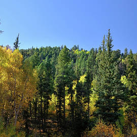 Aspen And Cottonwood In Concert by Ron Cline
