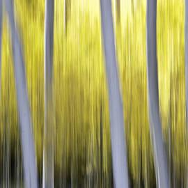 Aspen blurr by Bryan Keil