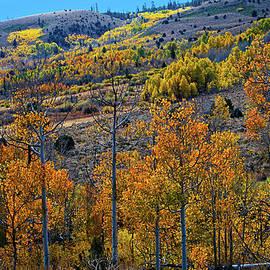 Lynn Bauer - Aspen Cascades in the Sierra
