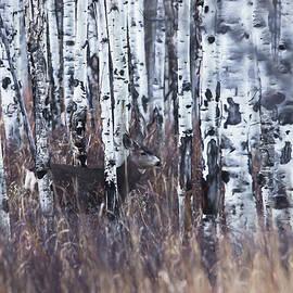 Ernie Echols - Aspen View 3