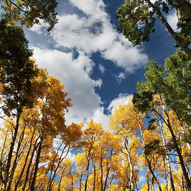 Aspens and Such in Northern Arizona by Dave Wilson