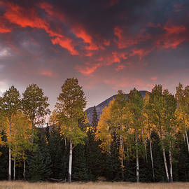 Aspens at Sunset in Northern Arizona by Dave Wilson