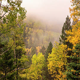 Aspens In Autumn 9 - Santa Fe National Forest New Mexico by Brian Harig
