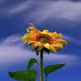 Yuri Hope - Aspiring to the sun