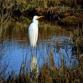 Assateague Island Great Egret Ardea Alba by Assateague Pony Photography