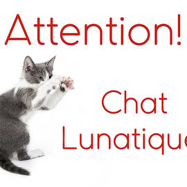 Attention Chat Lunatique by Endre Balogh