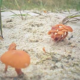 Auf Pilzjagd.  #pilze #sandboden