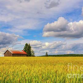 Veikko Suikkanen - August countryside 5