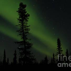Sharon Mau - Aurora Borealis The Northern Lights Interior Alaska