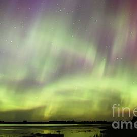 Aurora Frenzy by Larry Ricker