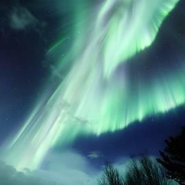 David Broome - Auroral Pegasus