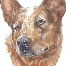 Australian Cattle Dog in Color by Barbara Keith