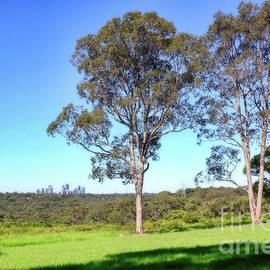 Aussie Gum Tree Landscape by Kaye Menner