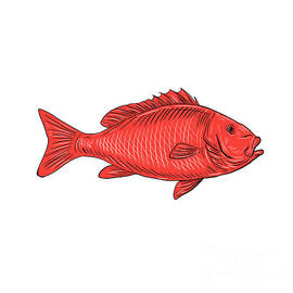 Aloysius Patrimonio - Australasian Snapper Swimming Drawing