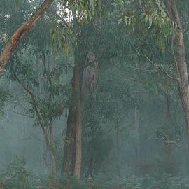 Evelyn Tambour - Australian Morning