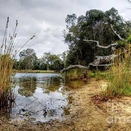 Hans Peter Goepel - Australian - Wetlands