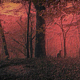 Thomas Woolworth - Autumn 2015 Panorama In The Woods PA 05
