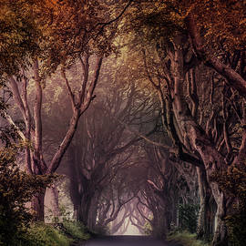 Autumn Alley In Northern Ireland by Jaroslaw Blaminsky