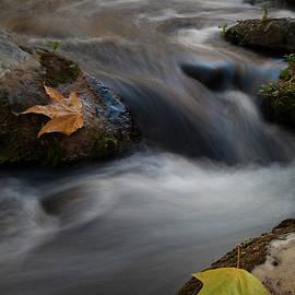 Fossil Creek, Arizona, I by Dave Wilson