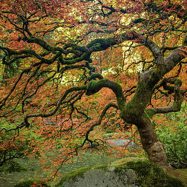 Don Schwartz - Autumn Along the Pond