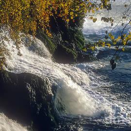 Bob Phillips - Autumn at the Rhein Falls