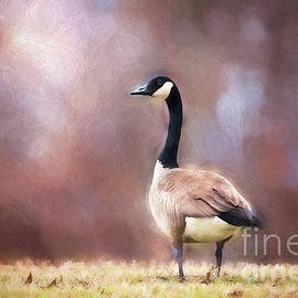 Sharon McConnell - Autumn Canada Goose