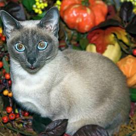 Autumn Cat by Sally Weigand